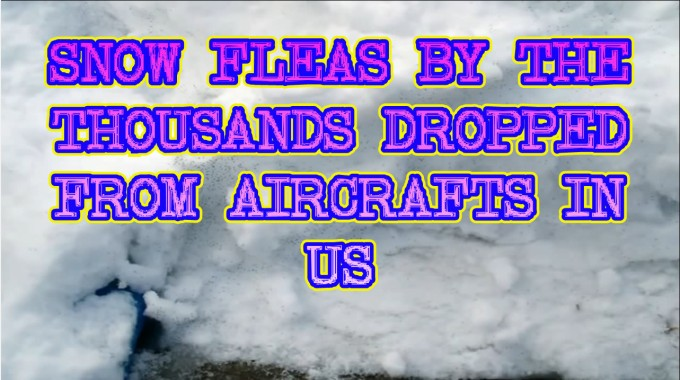 SNOW FLEAS BY THE THOUSANDS DROPPED FROM AIRCRAFTS IN US